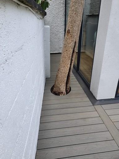 decking around tree